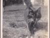 Kathleen Mary Willis Photo Album