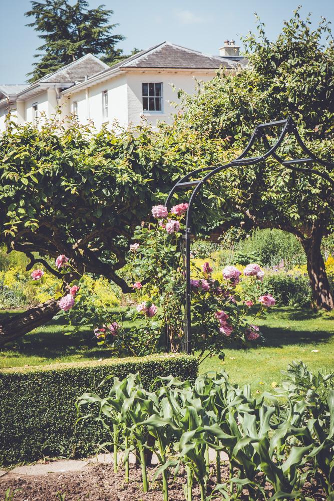 _A5K1166June 15, 2017 Vintage Garden
