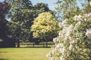 _A5K1138June 15, 2017 Vintage Garden