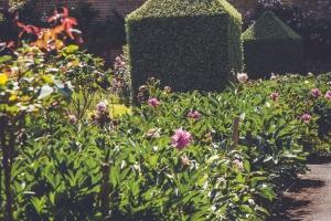 _A5K1155June 15, 2017 Vintage Garden