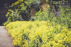 _A5K1156June 15, 2017 Vintage Garden
