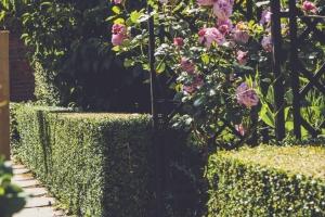 _A5K1165June 15, 2017 Vintage Garden