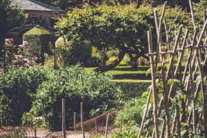 _A5K1174June 15, 2017 Vintage Garden