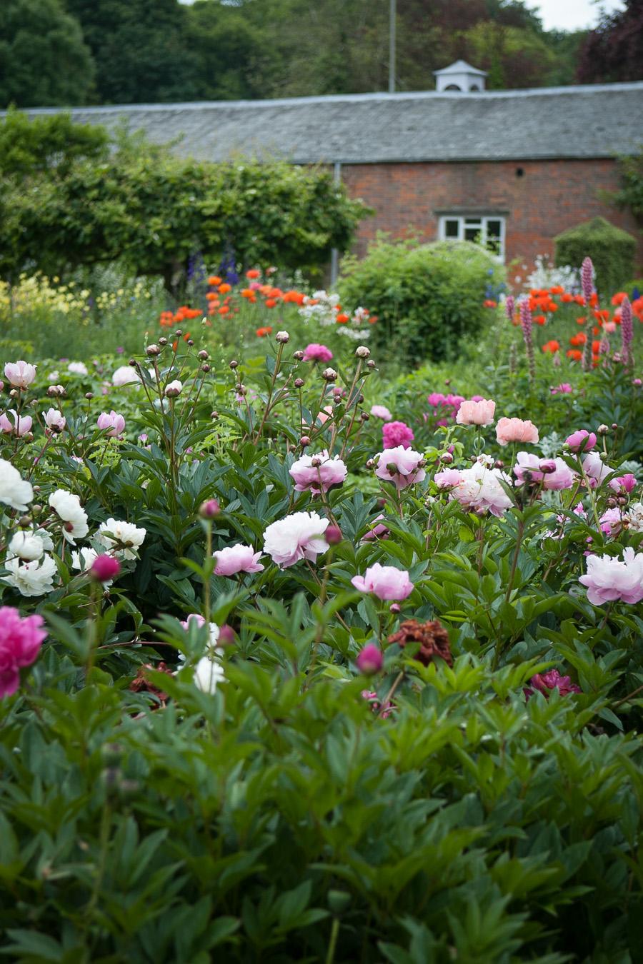 garden-6962