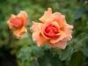 garden-6965