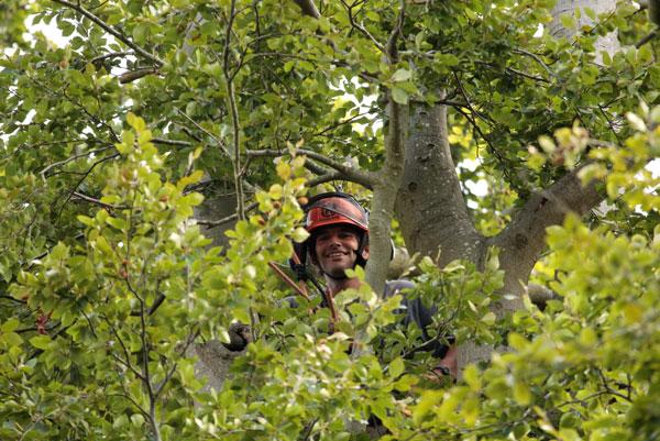 Pablo Sanchez the tree surgeon