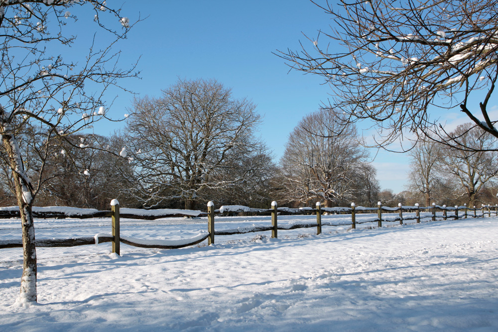 Chestnut fencing in the snow.