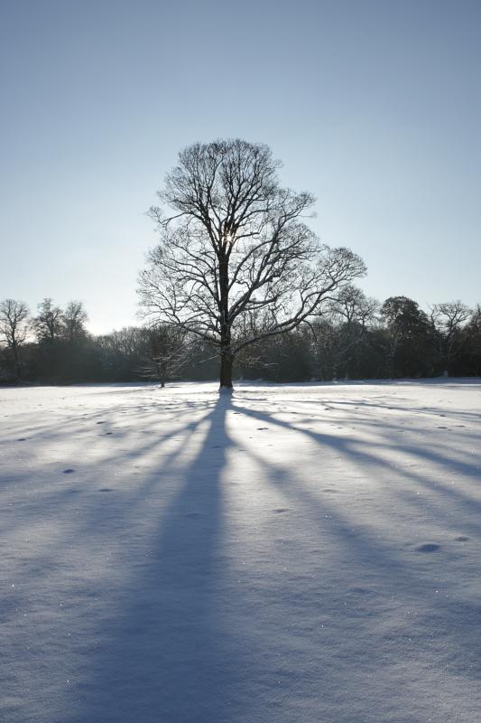 Parkland trees