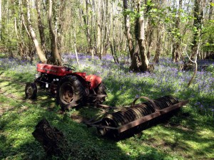 Rolling the tracks in the bluebell wood with the Massey Ferguson 135